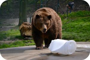drypstenshule bjørne bryggeri