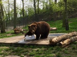 familietur bjørne guide